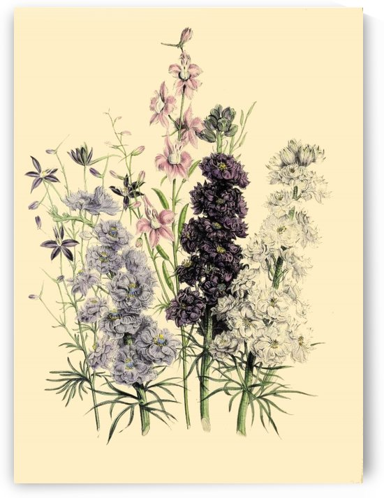 botanical print antique floral by Shamudy