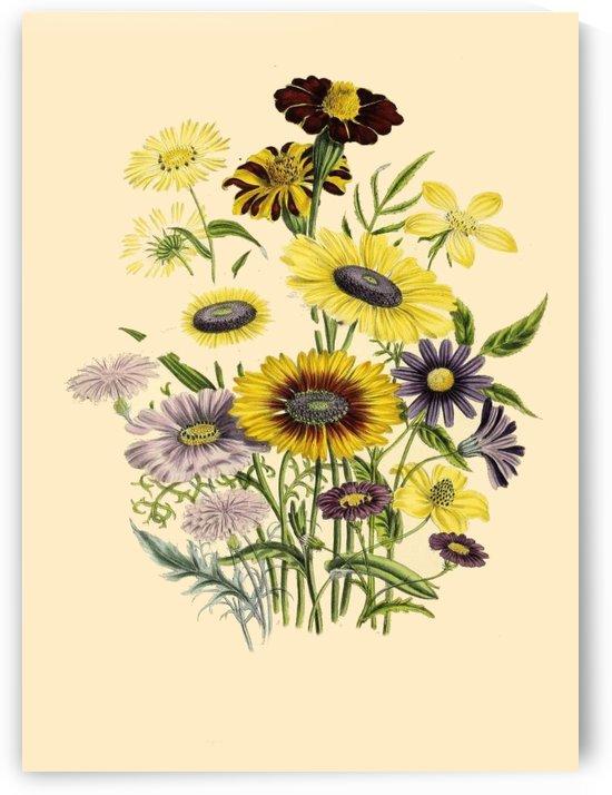 botanical print antique flora by Shamudy