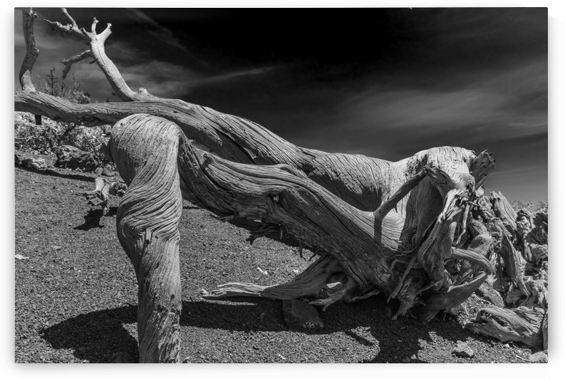 It Was A Twisted Life. BW by Garald Horst