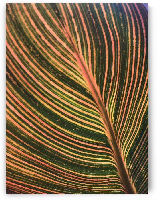 leaf patten lines colorful plant by Shamudy