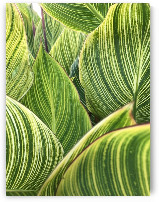 leaves striped pattern texture by Shamudy
