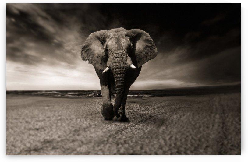 elephant animal africa safari by Shamudy