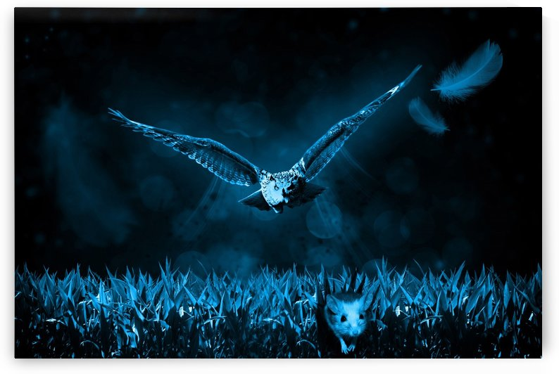 owl mouse hunt night nature by Shamudy