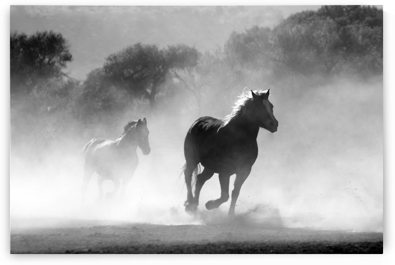 horse herd dust nature wild by Shamudy