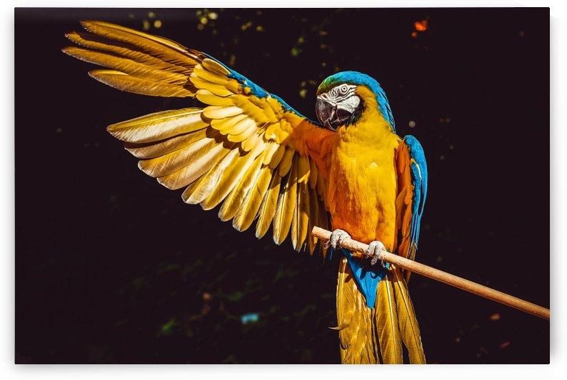 ara parrot yellow macaw bird by Shamudy