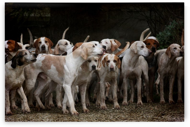 dog herd canine animal pet hounds by Shamudy