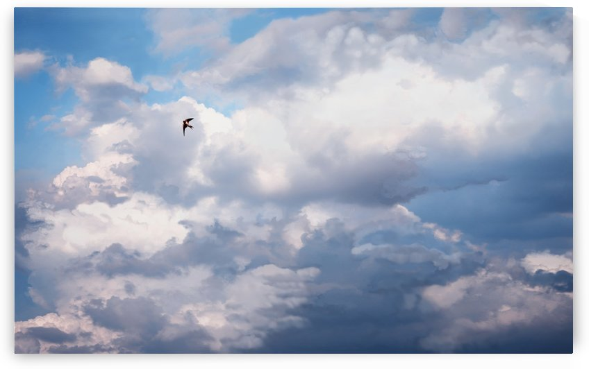 Happy Swallow, Big Sky by Katharine Asals Photography