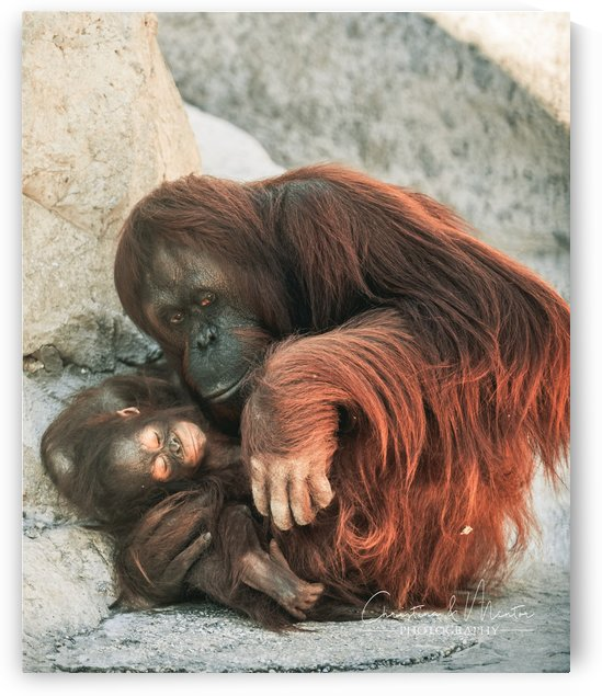 Motherly Love by Mentor Mala