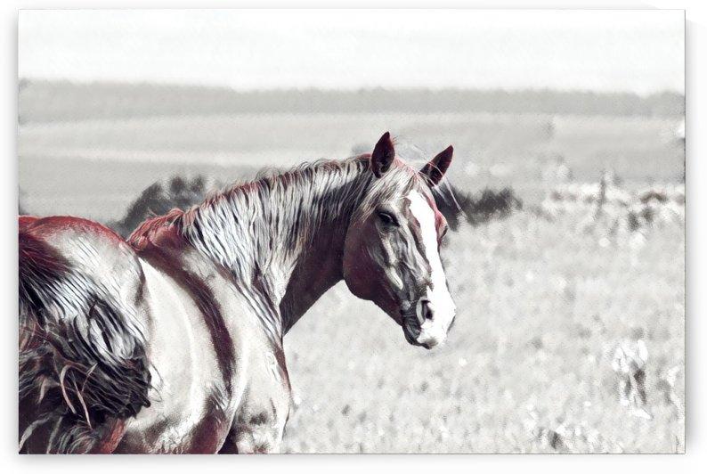 fields of freedom by Sherry Reynard