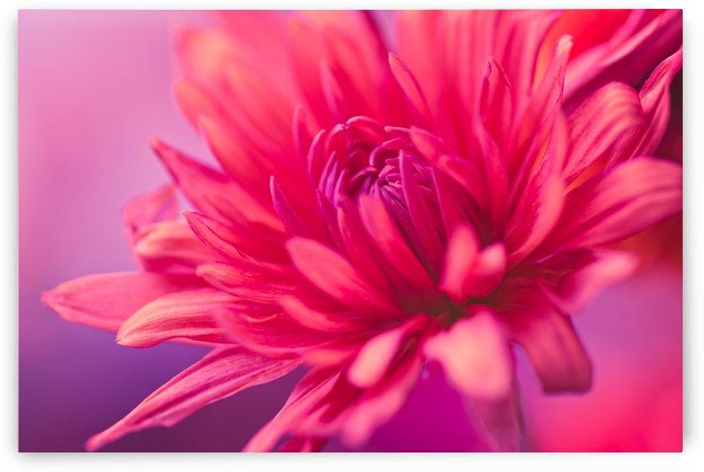 Pretty in Pink by Orada J