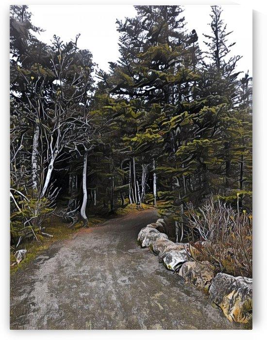 Trails in Newfoundland by Sherry Reynard