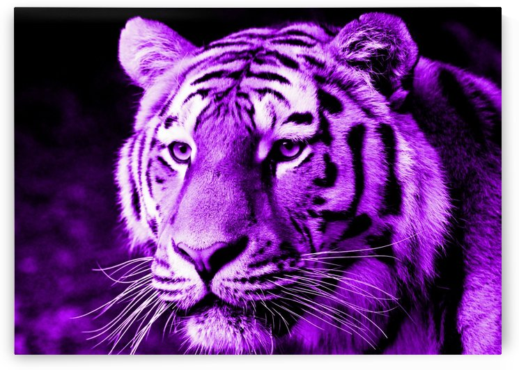 Tiger pop purple by Thula-Photography