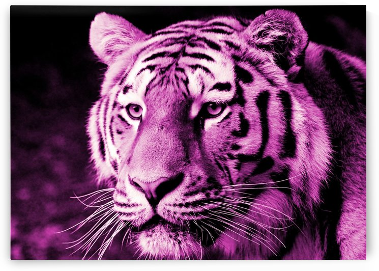 Tiger pop pink by Thula-Photography