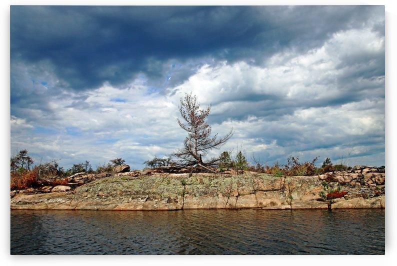 Dead Tree Stormy Sky by Deb Oppermann