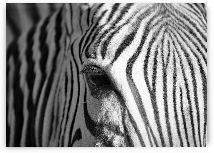 Zebra eye by Thula-Photography