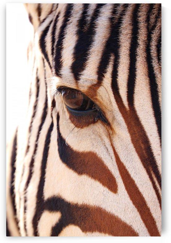 Zebra Eye 1870 by Thula-Photography