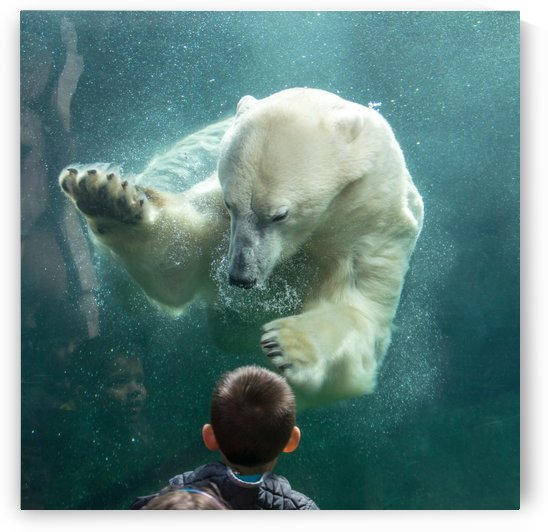 Sons close encounter with a Polar Bear 3 by Stephen Hikida