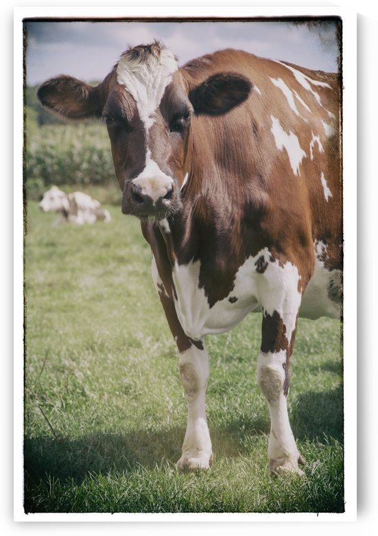 Brown Cow by Alexis Arnold