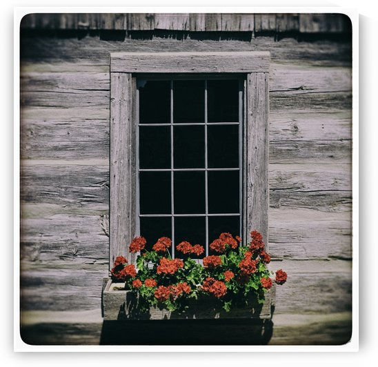 Window of Flowers by Alexis Arnold