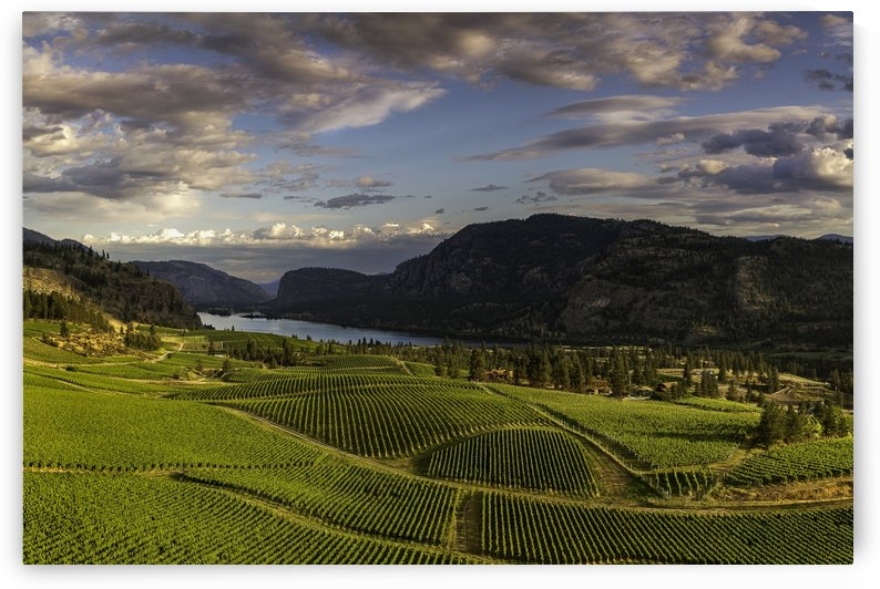 Vaseaux Lake vineyard by fredmeyer