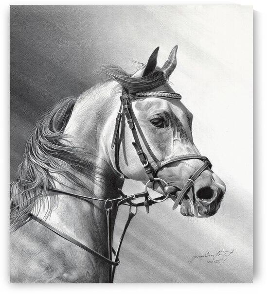 ARABIAN BEAUTY by Miro Gradinscak