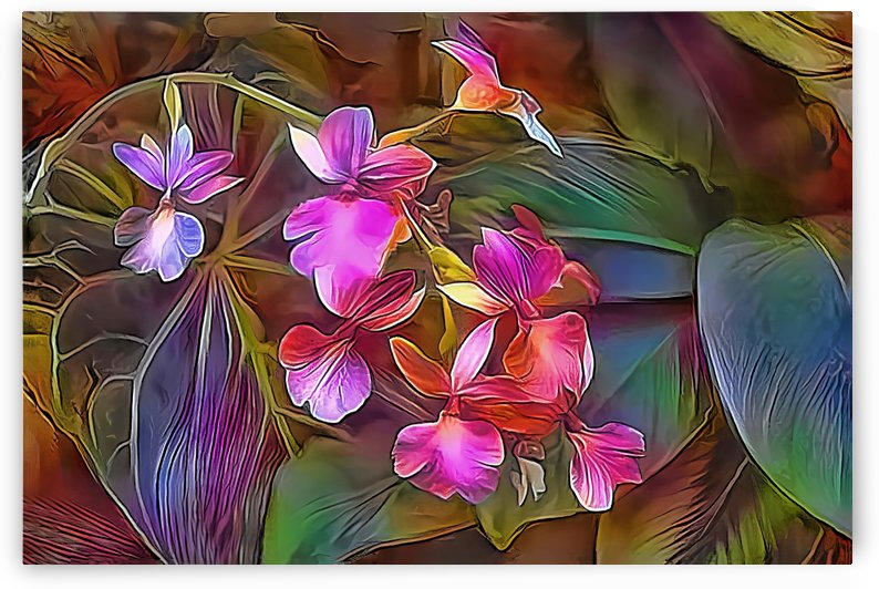 Tropical Orchids  by HH Photography of Florida
