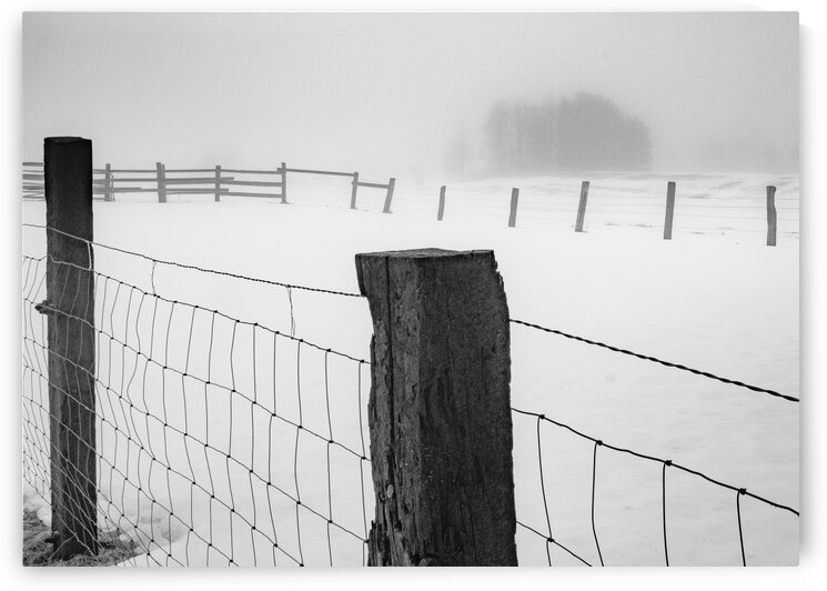 Fenced In by Dave Therrien