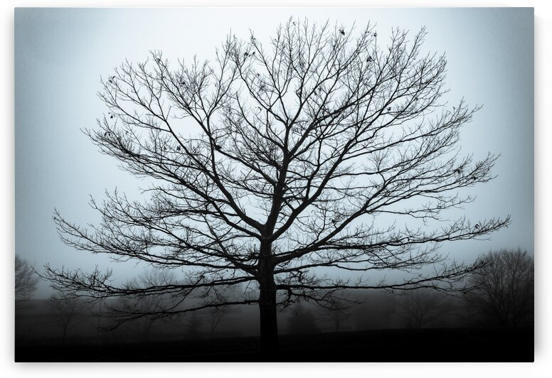 Silhouette in Blue by Dave Therrien