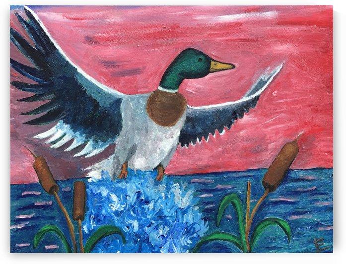 Mallard Duck Taking Flight by EF Kelly