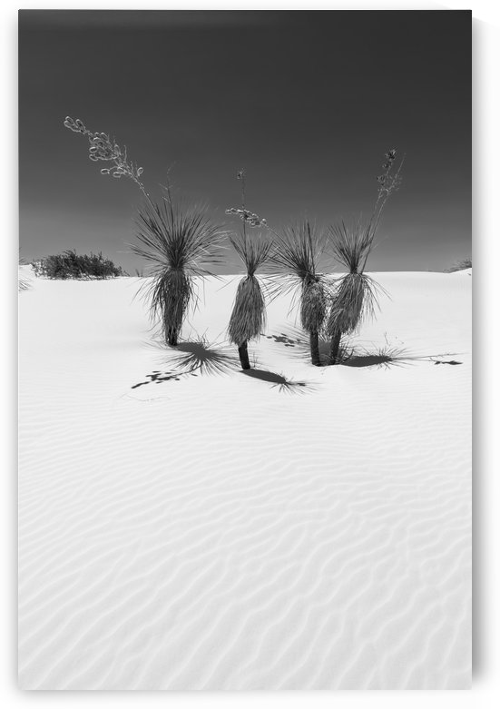 Wave pattern of dunes & Yucca White Sands National Monument | Monochrome by Melanie Viola