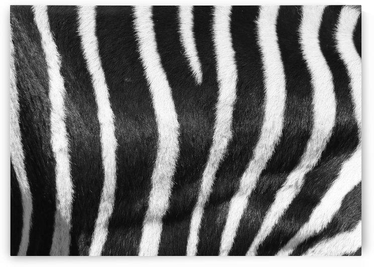 Zebra Pattern D 1565 by Thula-Photography