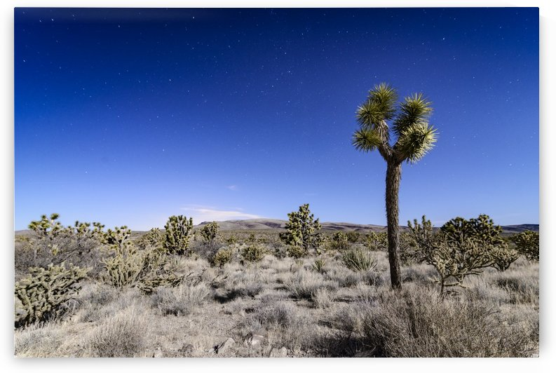 Arizona Desert  by Luis Bonetti