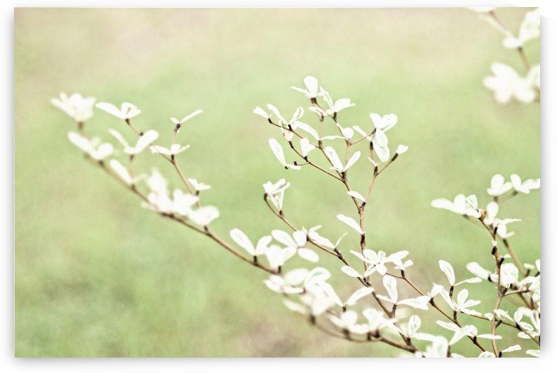 Baby Leaves by Orada J