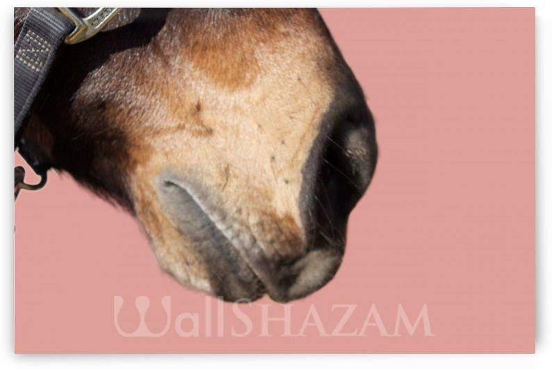 Horse with Pink by Wallshazam
