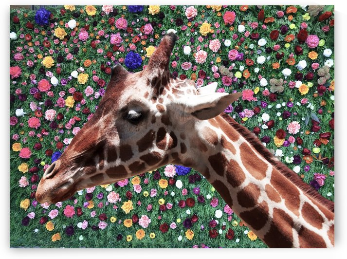 Giraffe with Flower Background by Wallshazam