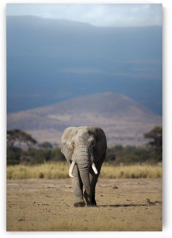 Guardian of Kilimanjaro  by Gurdyal Singh