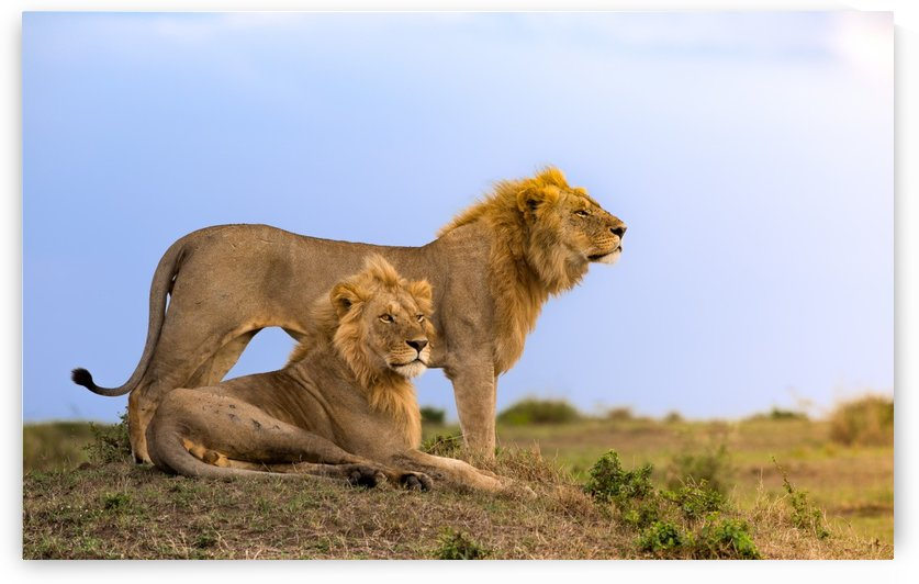 Lion Brothers by Gurdyal Singh
