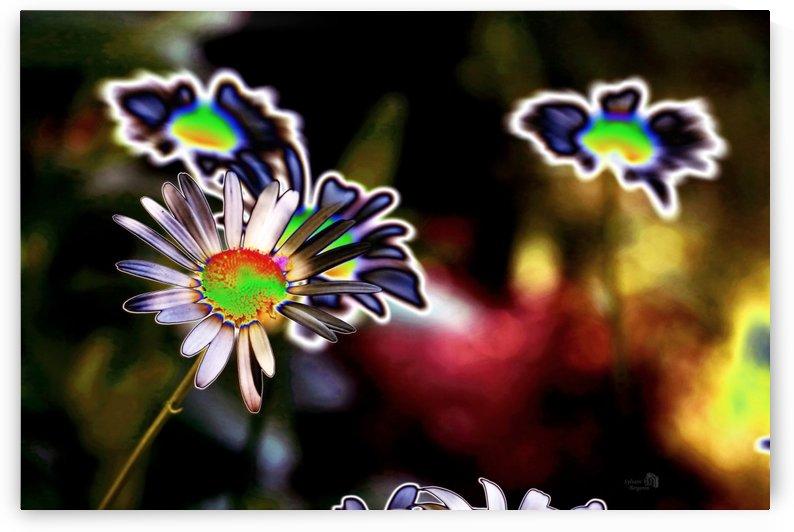 Floraison Artistique-Artistic blooming by Sylvain Bergeron Photographies