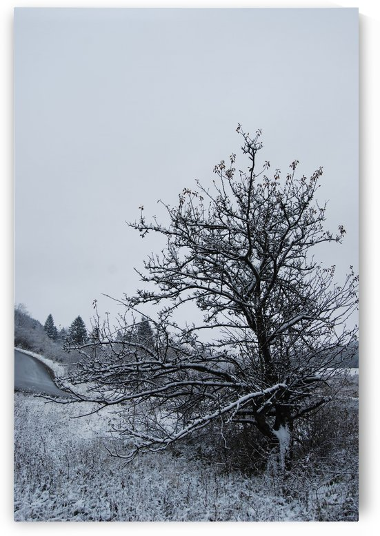 Snowy Tree by sorchae aaron