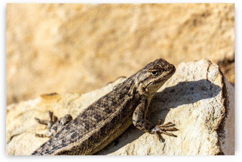 Lizard by natzic