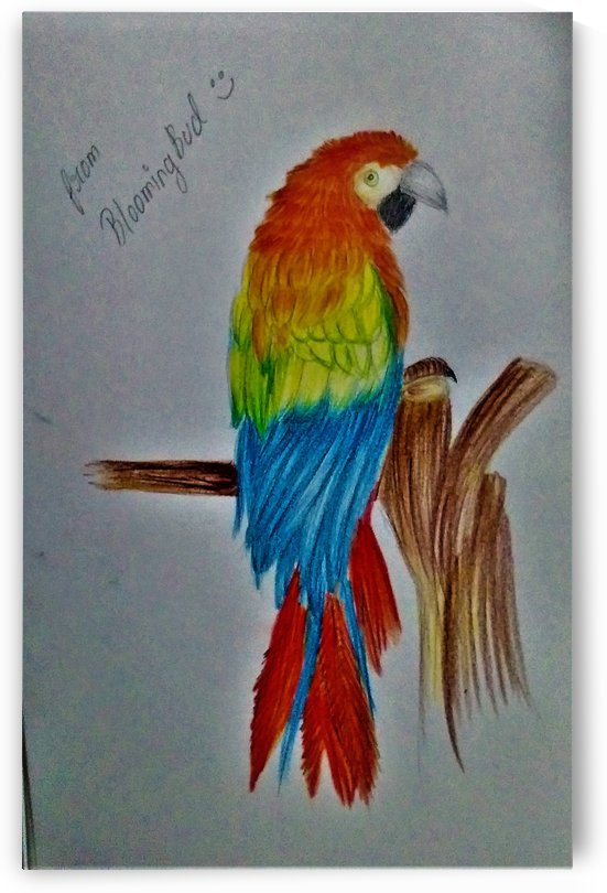 colourful parrot by Mamta Majhi