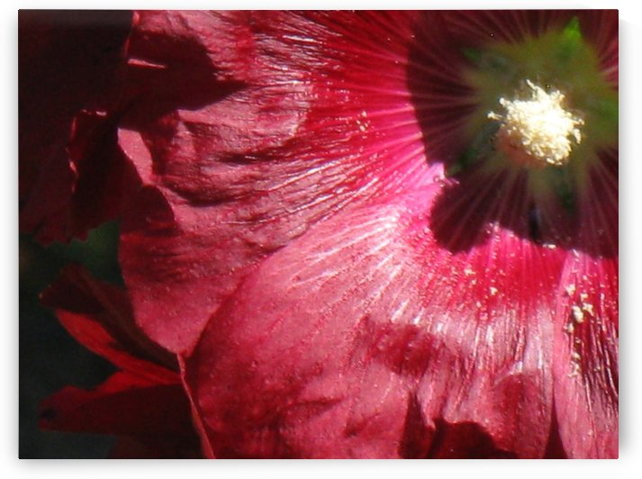 Red Hollyhock by Michelle K Wood
