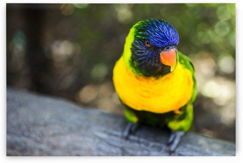 Parrot by Luis Bonetti
