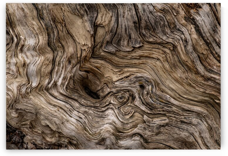 Banff Petrified Wood by Dave Therrien