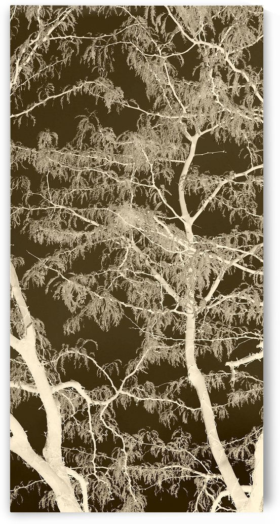 Lacey Sepia Tree middle by Ellen Barron O-Reilly