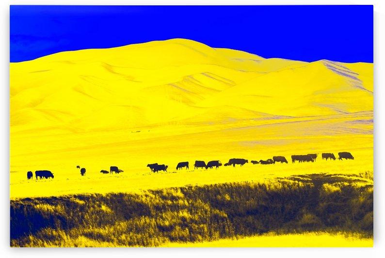 Cows Pop by Orada J