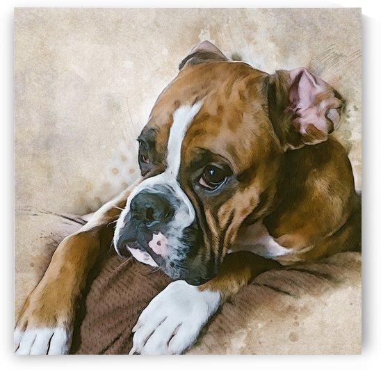 Boxer Watercolor by Elle Halle