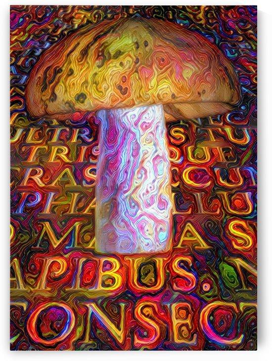 Latin Mushroom by Bruce Rolff
