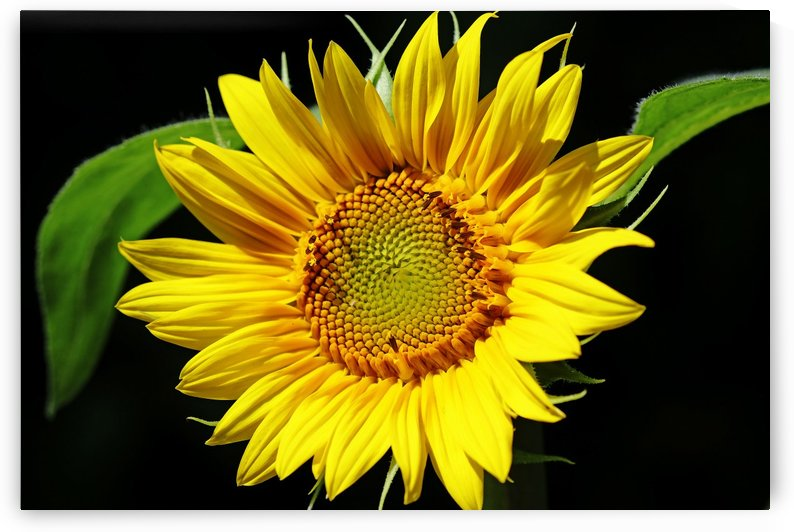 Bright And Cheery by Deb Oppermann