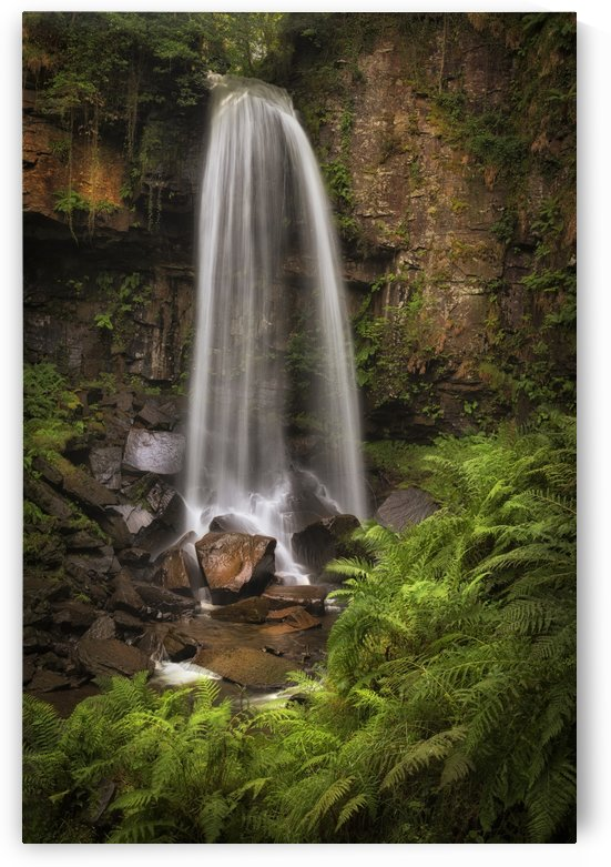 Waterfall and ferns at Melincourt by Leighton Collins